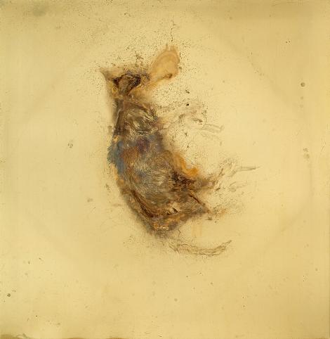 YOU TURNED ME INSIDE OUT Messinki, kuolleen eläimen jäänteet Brass, original substances of a dead animal 100 x 100cm  2014 (original photo Jussi Tiainen)