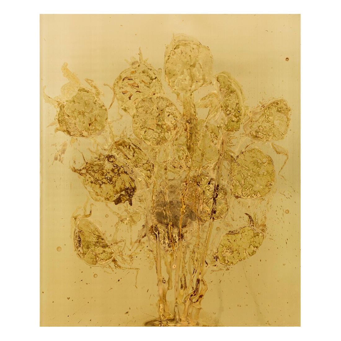 SUNFLOWERS Messinki, ihmisen istukan jäänteet Brass, original substances of human a placenta 120 x 100cm 2016